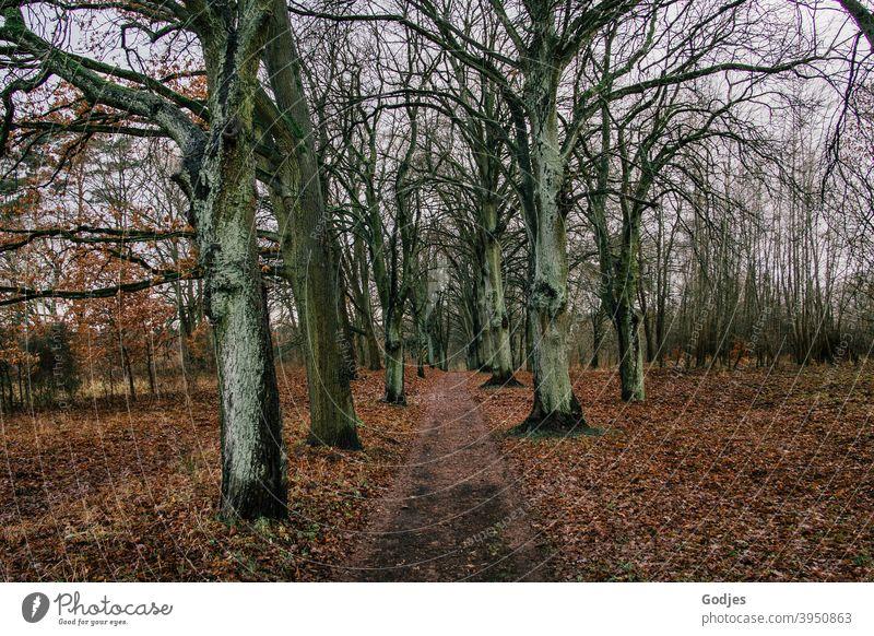 Weg zwischen kahlen Bäumen, Herbstlaub am Boden Waldweg Pfad Spaziergang Outdoor Winter Laub trist Natur Umwelt Außenaufnahme Baum Landschaft Erholung