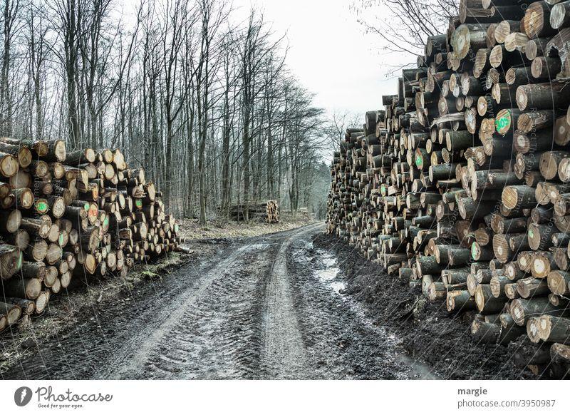 abgestorben   aber der Natur geht nichts verloren! Holz Baum Wald Baumstamm Menschenleer Außenaufnahme Forstwirtschaft Holzstapel Nutzholz Brennstoff Umwelt