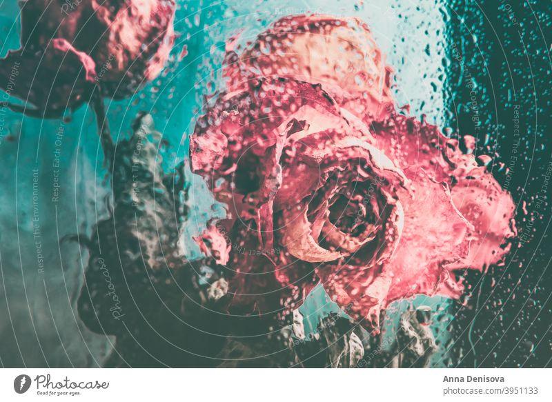 Strauß schöner verblühter Blumen durch das Glas mit Regentropfen Roséwein trocknen Blütenblatt Vorbau Blatt Herz orange Fenster Tropfen Wasser gebrochen Tag
