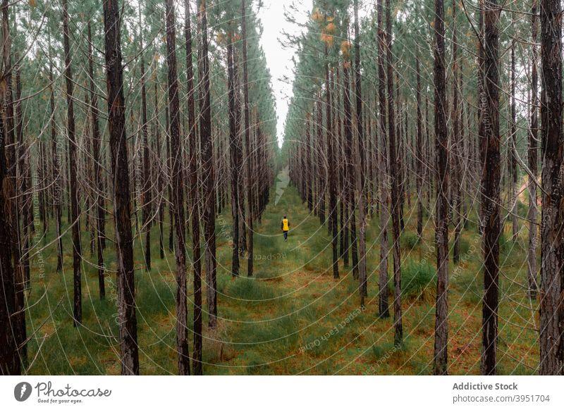 Schmaler Fußweg im üppigen Tannenwald Weg Wald Baum nadelhaltig Natur Laubwerk ländlich Fichte malerisch Wälder Person Spaziergang Australien üppig (Wuchs)