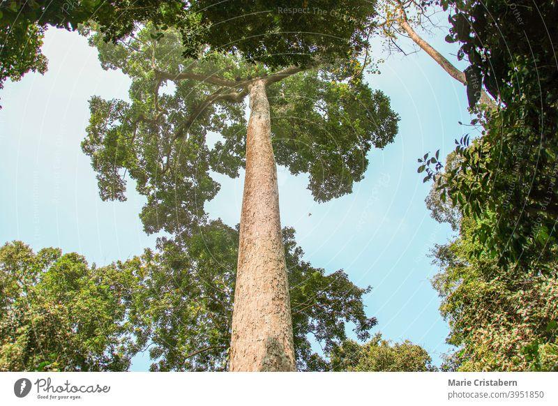Üppiger dichter Wald im Cuc Phoung National Park in Ninh Binh, Vietnam geheimnisvoll Umweltberater Naturschutzgebiet Erdtag Raum ruhig im Freien Wälder