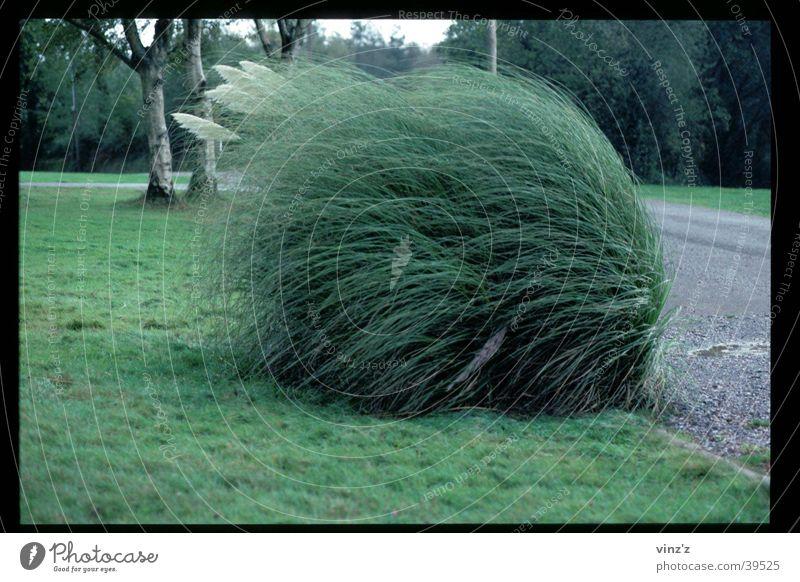 Busch im Wind grün grau Wetter Sträucher Richtung