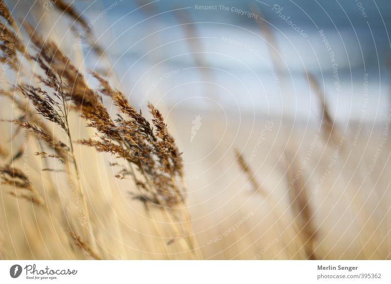 Nähe und Weite Ausflug Ferne Freiheit Sommer Strand Meer Gras Seeufer Nordsee Ostsee Glück Zufriedenheit Optimismus achtsam Vorsicht Wahrheit authentisch