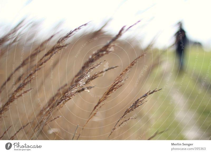 Regen an der Ostseeküste Ferien & Urlaub & Reisen Tourismus Strand Meer Mensch Körper 1 30-45 Jahre Erwachsene 45-60 Jahre 60 und älter Senior Umwelt Natur