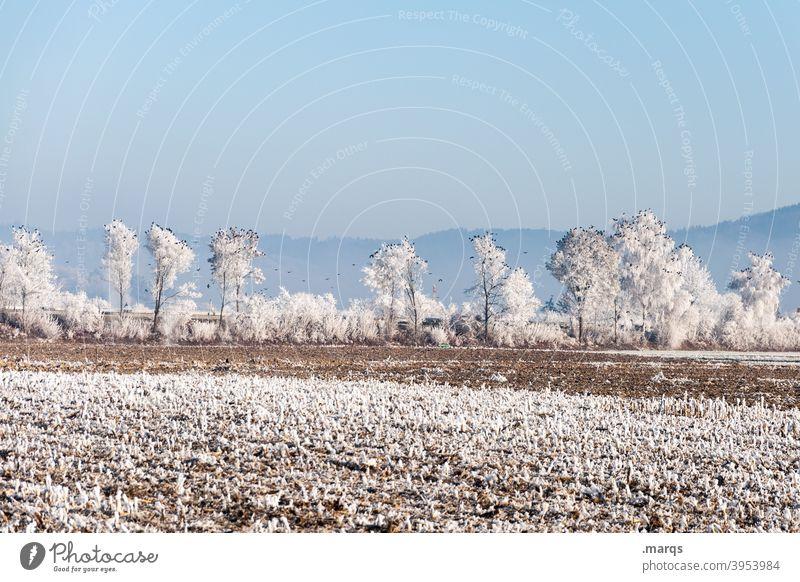 Krähen auf schneebedeckten Bäumen Natur Landschaft ländlich Ackerbau Wolkenloser Himmel Winter Frost gefroren Baum außergewöhnlich Vögel viele Horizont
