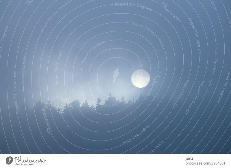 Sonnenaufgang im Nebel über einem Wald Bäume Herbst Winter kalt Natur Menschenleer Außenaufnahme Umwelt Wetter geheimnisvoll Baum Idylle Textfreiraum links