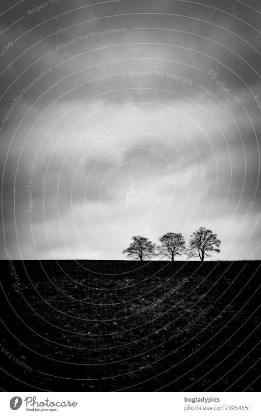 Trio am Horizont Bäume Baum Bäume am Horizont drei Wolken Natur karg Winter dunkel trist Landschaft kalt Ruhe Himmel Schwarzweißfoto grau schlechtes Wetter