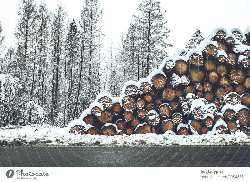 Bäume senkrecht und waagerecht im Schnee Baum Baumstamm Baumstämme Winter Brennholz Brennstoff Klafter Raummeter Holz Wald Holzstapel Forstwirtschaft Totholz