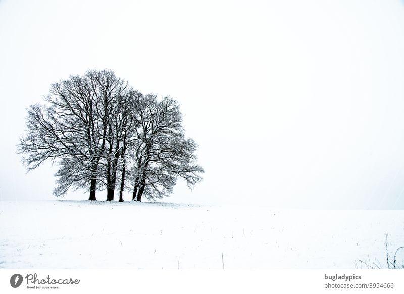 Baumgruppe im Schnee Bäume Schneelandschaft Winter Winterstimmung Landschaft Wald Frost Wintertag kalt Natur Winterlandschaft Winterspaziergang weiß Kälte