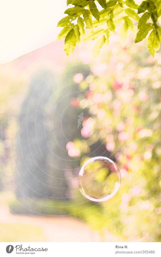 Die Leichtigkeit des Seins Natur Pflanze Sommer Schönes Wetter Baum Blatt Garten Spielen frisch hell Wärme gelb grün Freude Glück Lebensfreude Seifenblase