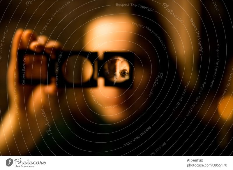 Kopf verdreht Lupe Lupeneffekt Kopfstand Farbfoto Nahaufnahme Reflexion & Spiegelung Frau Frauengesicht Porträt Verdrehte Welt Mensch feminin 18-30 Jahre