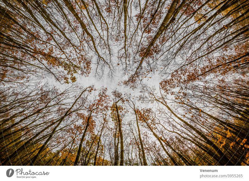 Wald im Herbst Wälder Baum Bäume Waldboden Bodenanlagen Unkraut Bodenbewuchs Kofferraum Rüssel Baumstämme Natur Landschaft Deutschland
