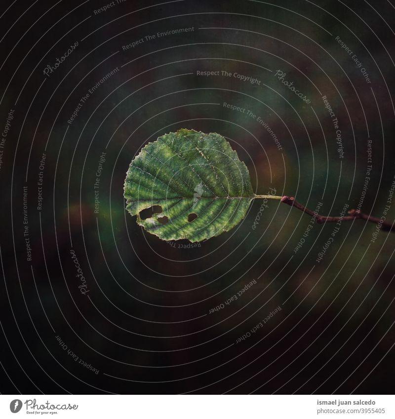 grünes Blatt in der Natur natürlich Laubwerk Saison texturiert im Freien Hintergrund Schönheit Zerbrechlichkeit Frische Herbst Herbststimmung Herbstsaison