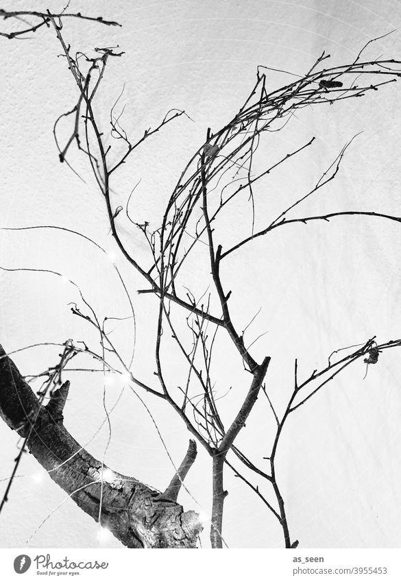 Äste und Zweige Zweige u. Äste Schwarzweißfoto schwarz weiss grafisch linear Baum Natur Menschenleer Winter Tag grau kalt Kontrast Ast Licht Pflanze trocken