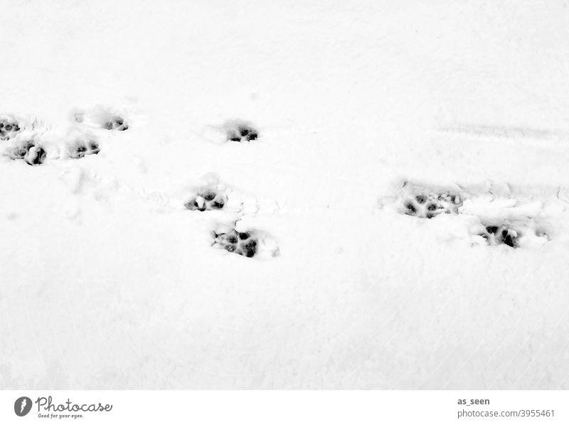 Tierspuren im Schnee Spuren Fußabdrücke Winter kalt weiß Außenaufnahme Menschenleer Eis Frost Tag Schneespur Kontrast Schwarzweißfoto Schneedecke Wege & Pfade