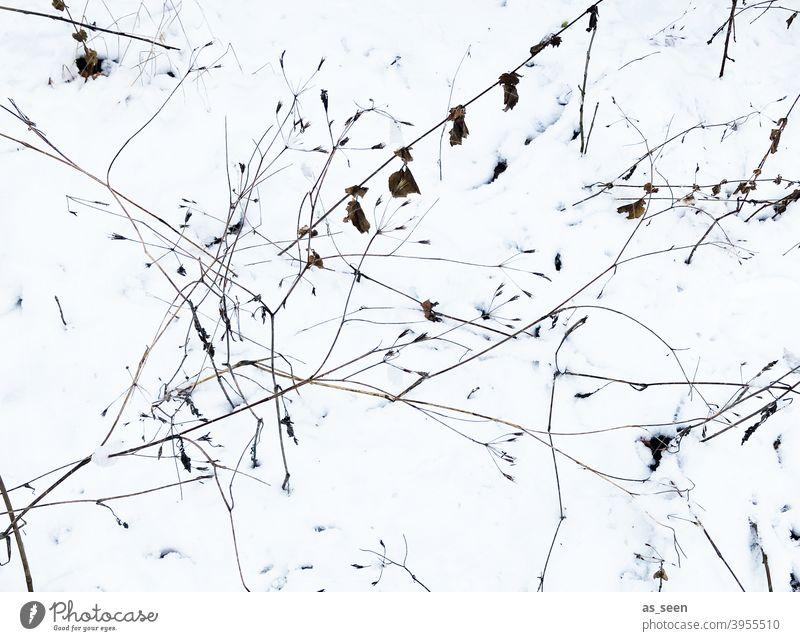 Gräser im Schnee Vogelperspektive Natur Pflanze Außenaufnahme Gras Menschenleer Umwelt Winter Grafik grafisch weiss schwarz braun kalt Eis Farbfoto
