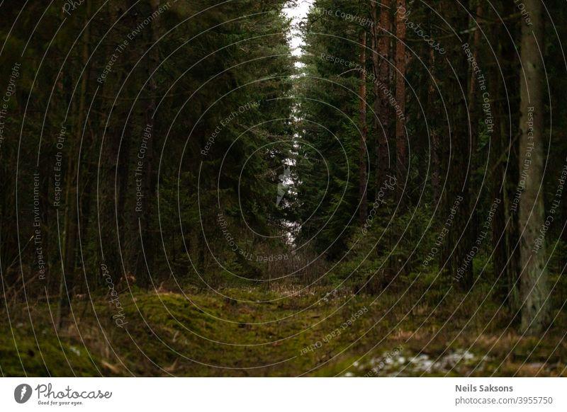 Hoffnungsvolle Perspektive in der Dämmerung des dichten Waldes / Licht am Ende des Tunnels Weg laufen reisen Nachlauf Natur Landschaft Baum Umwelt grün