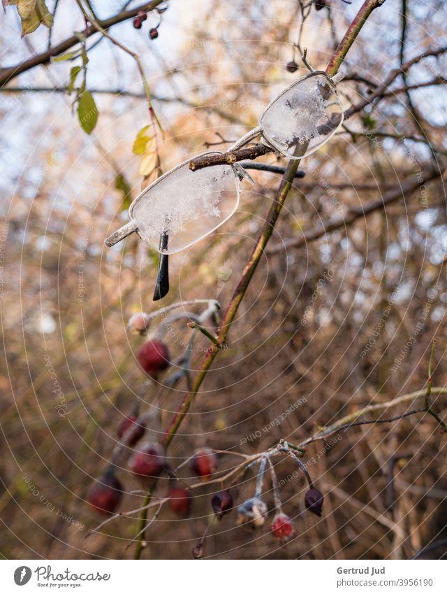 Verlorene Brille hängt in winterlichem Gebüsch Blätter Natur Raureif Winter kalt Frost Pflanze gefroren Eis Außenaufnahme Nahaufnahme Eiskristall Menschenleer