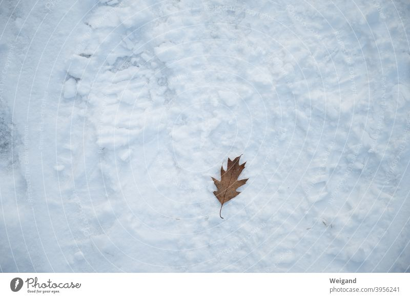 Alleinsein im Winter Blatt allein Einsamkeit Schnee Boden Depression winterdepression einsam traurig Traurigkeit unglücklich Denken deprimiert besinnlich ernst