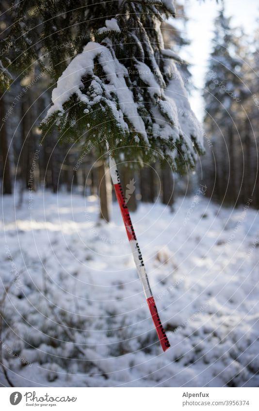 seltene Frucht Wald Schnee Absperrband Corona Absperrung Sicherheit Schutz Pandemie absperrband flatterband Baum Nadelbaum Prävention Corona-Virus Schützen