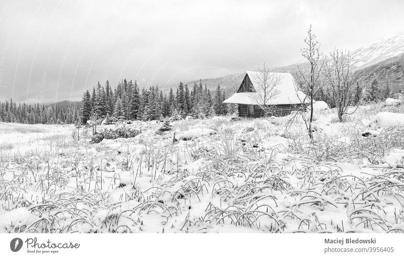 Gasienicowa Tal mit Holzhütte im verschneiten Winter, Tatra-Gebirge, Polen. Berge u. Gebirge Landschaft Hütte Schnee weiß schwarz Schneefall schön malerisch