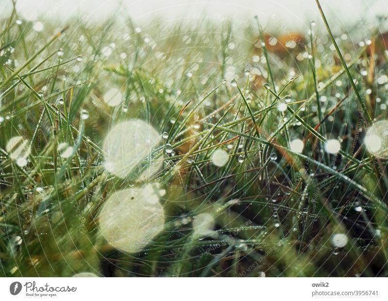 Geflimmer Gras Wildpflanze Wassertropfen Schönes Wetter draußen hell Landschaft filigran Tau Idylle natürlich verschwommen Morgenlicht frisch flirren klein