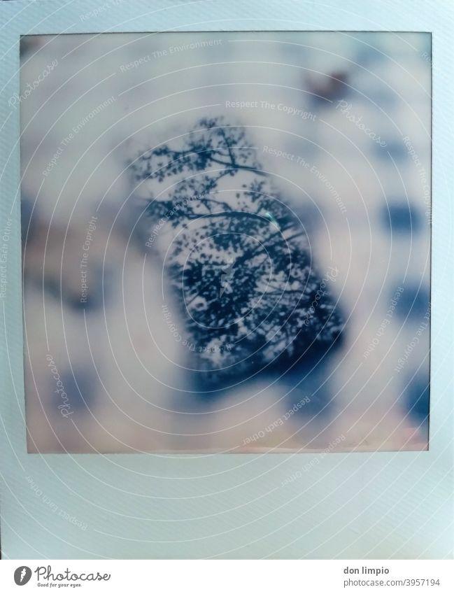 instant, polaroid, smartphone, reflektion, herbst, tischdecke ecken Tisch Nahaufnahme