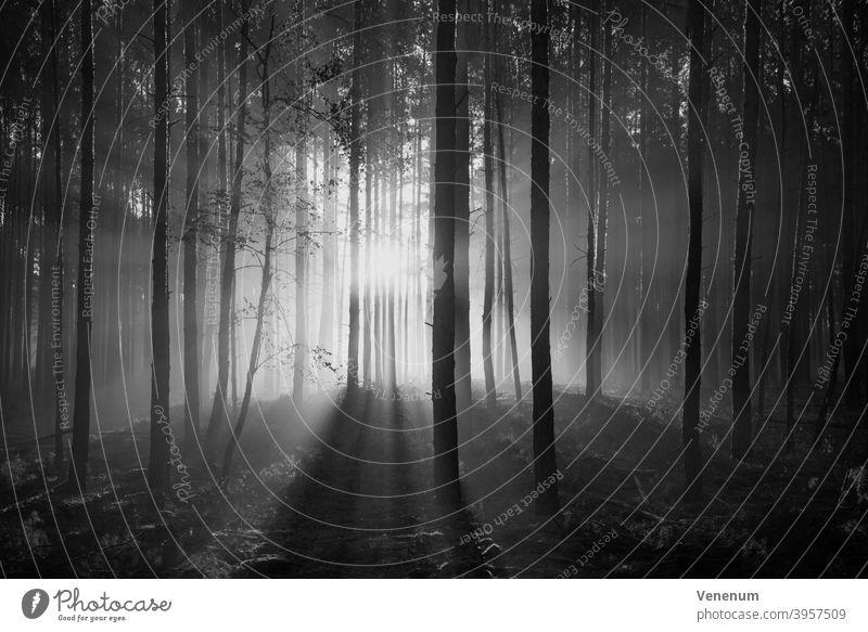 Sonnenaufgang im Wald im Herbst Tagesanbruch Saison Himmelserscheinung Wiese Weideland Baum Bäume Wolken Morgendämmerung anbrechend Natur Landschaft