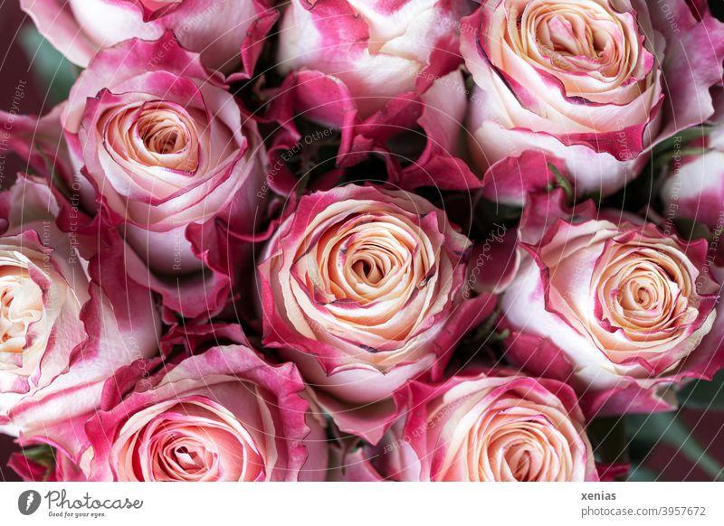 Rosa Blumenstrauß mit romantischen nicht ganz frischen Rosen Strauß rosa Blühend Rosenblüten Duft Sommer Romantik Dekoration & Verzierung Blüte Floristik
