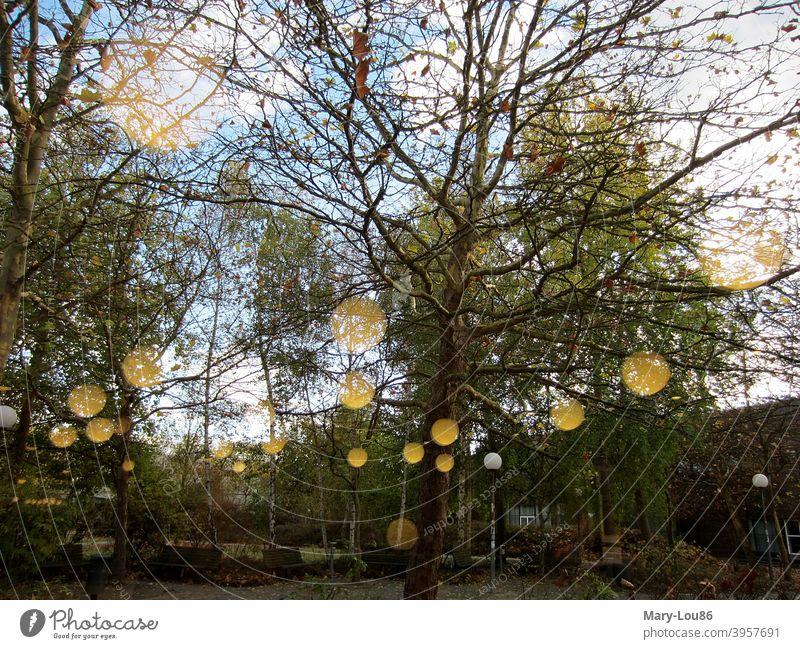 Herbstliche Bäume im Park mit Spiegelung Grünfläche Lampe Außenaufnahme Textfreiraum unten Textfreiraum oben Himmel blau Blick aus dem Fenster Birken golden