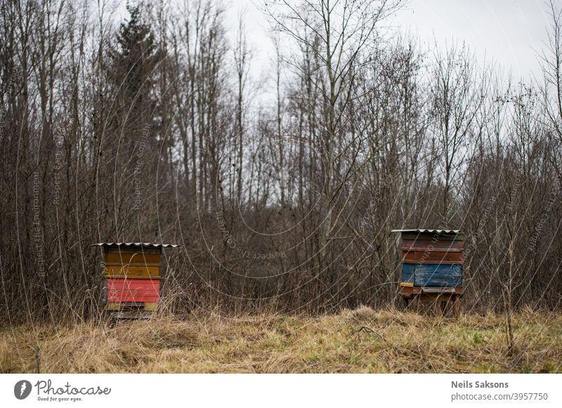 Gruppenbienenstöcke im Herbstgarten . danach Ackerbau Bienenkorb Bienenstock Bienenstöcke Bienenzucht blau Holzplatte Kasten Klima kalt Farbe bedeckt Europa