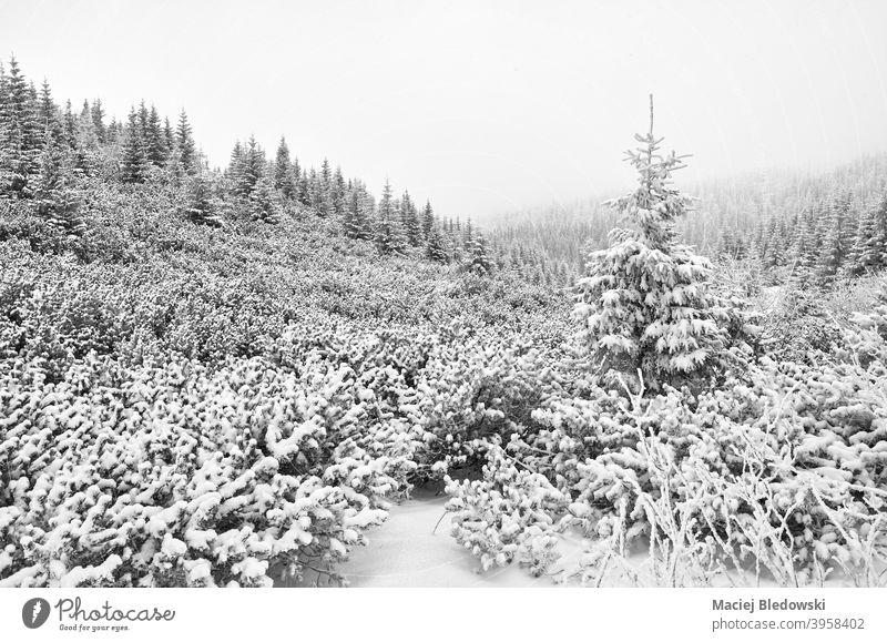 Schwarz-Weiß-Bild einer Berglandschaft bei starkem Schneefall. Winter weiß schwarz Natur Schneesturm Wald Baum schwarz auf weiß SCHWARZ-WEIß Landschaft Nebel