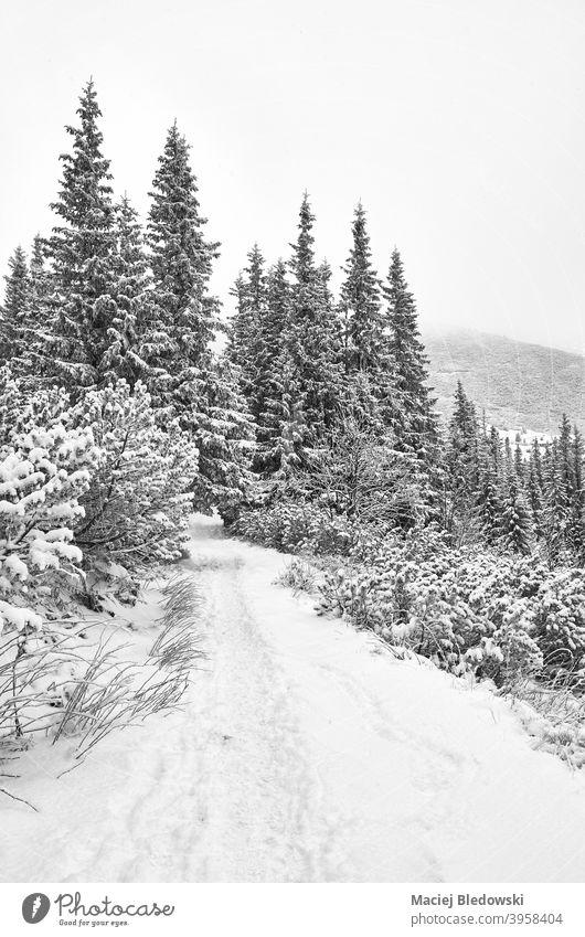 Schwarz-Weiß-Bild eines Bergpfades bei starkem Schneefall. Winter weiß schwarz Weg Abenteuer Berge u. Gebirge Fernweh Nachlauf Wanderung Natur Schneesturm Wald