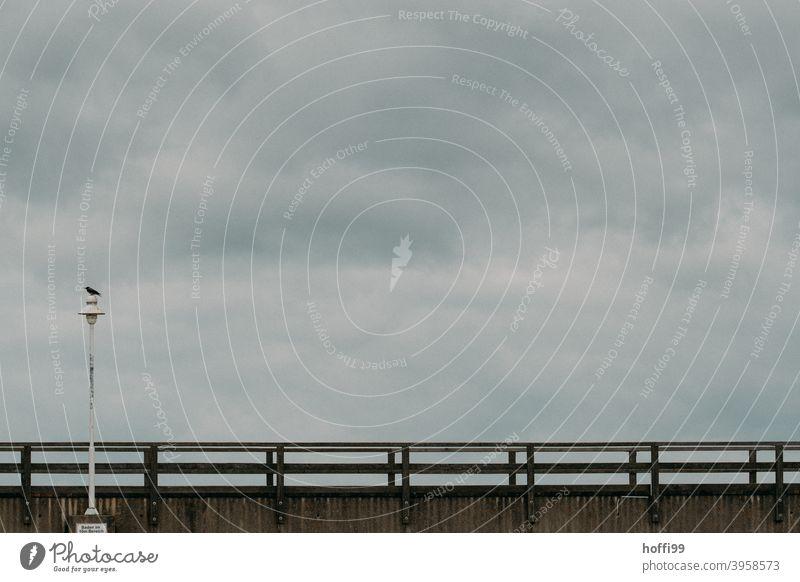 Die Krähe sitzt auf der Laterne an der Seebrücke am Meer Winter düster Küste Einsamkeit Insel maritim Nebelschleier Ferien & Urlaub & Reisen Ostseeküste Strand