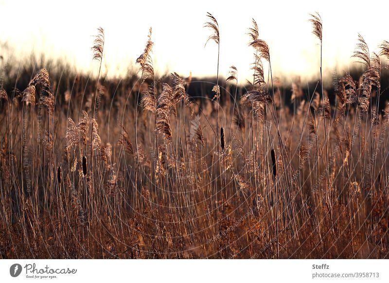 schneeloser Januar Wiese Graswiese Klimawandel Erwärmung Klimaerwärmung schneeloser Winter Extremwetter milder Winter Winterwetter Niedersachsen Winterlicht