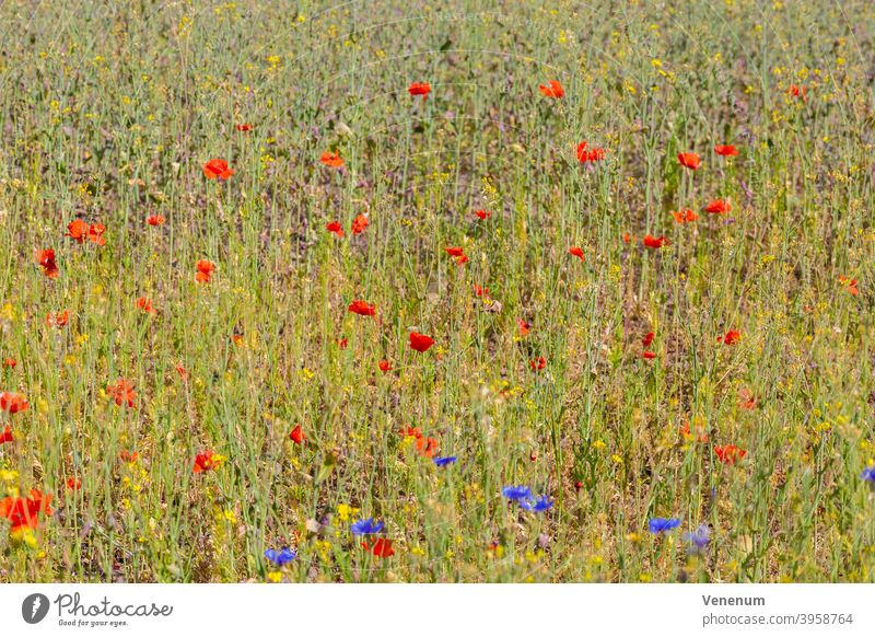 Wiesenblumen im Sommer Wildblumen Blumen Unkraut Gräser Blüte blüht Natur Natur-Pflanzen Natur Blumen Frühling