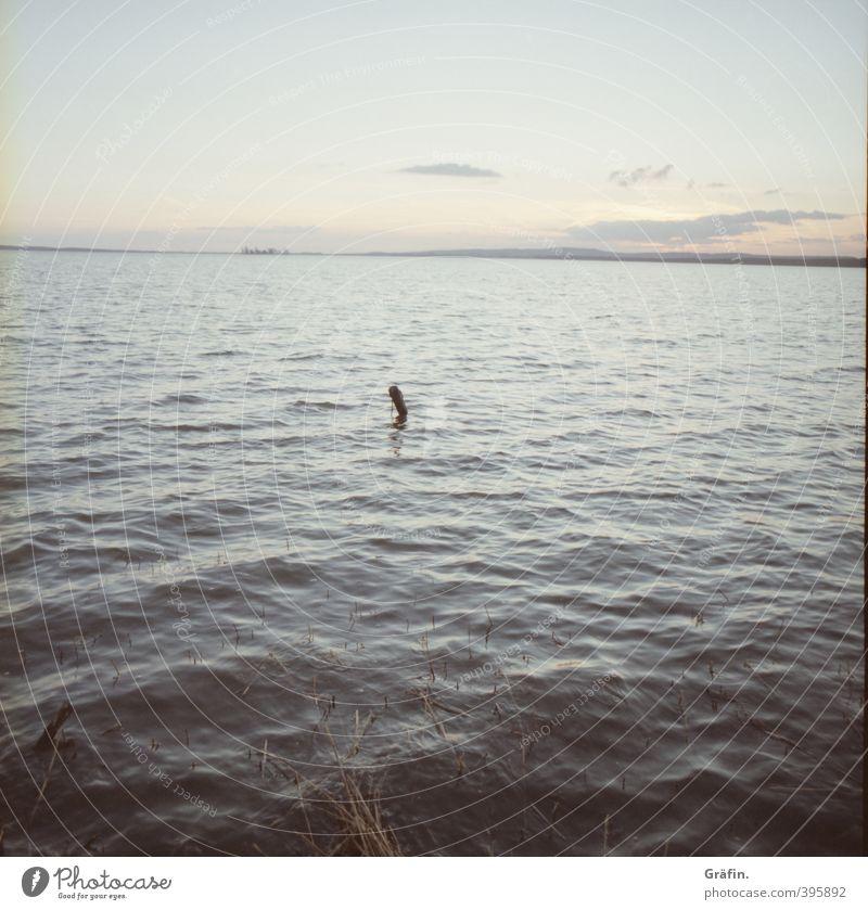 Sommerende Wasser Wolkenloser Himmel Schönes Wetter Wellen Küste Seeufer Unendlichkeit natürlich blau grau ruhig Fernweh Zufriedenheit Erholung Horizont Natur