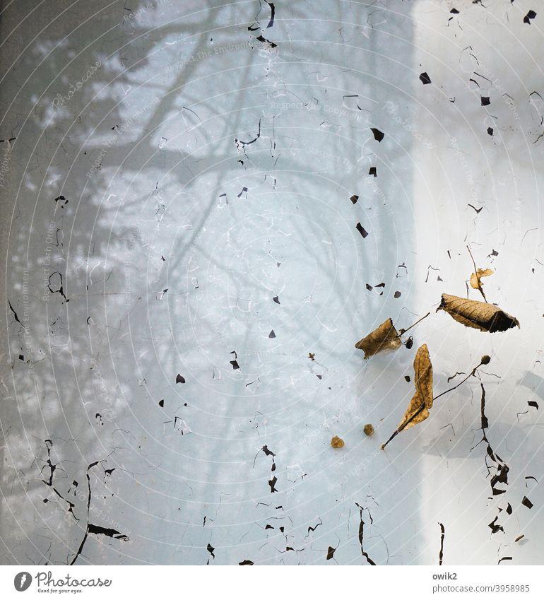 Flüchtig Glas Glasscheibe Reste Spuren Pflanze vertrocknet alt Vergänglichkeit Menschenleer Farbfoto Außenaufnahme Detailaufnahme Verfall Nahaufnahme