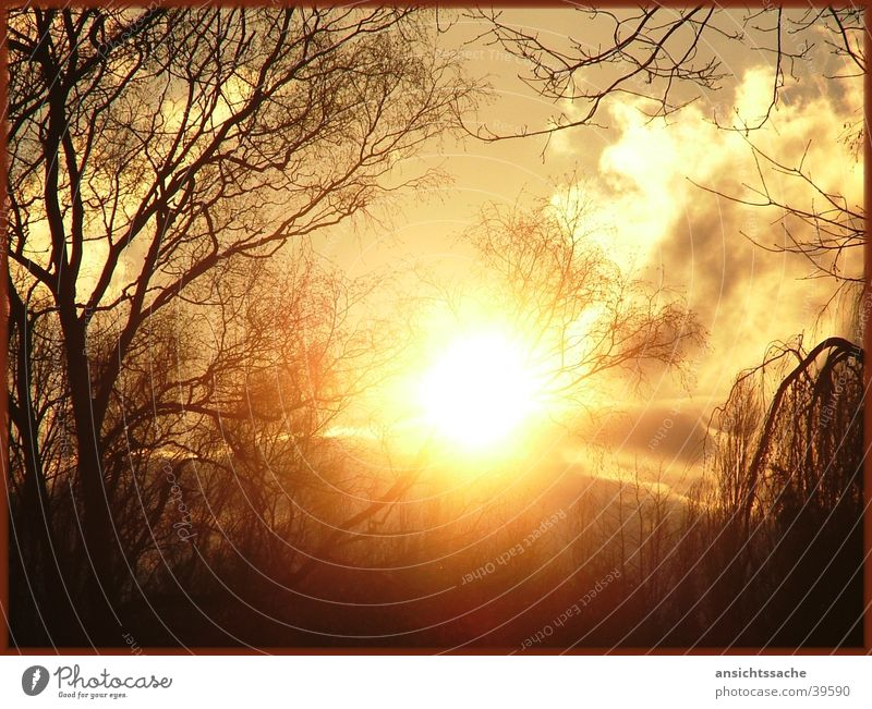 Karft Baum Sonne ruhig Wolken Kraft Ast Sonnenaufgang