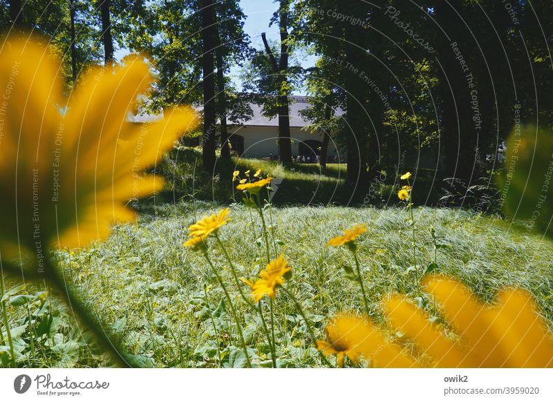 Lenz Natur Blume Frühling Außenaufnahme Nahaufnahme Farbfoto Pflanze blühen farbenfroh leuchtende Farben Blüte Blumen geheimnisvoll Makroaufnahme Halm
