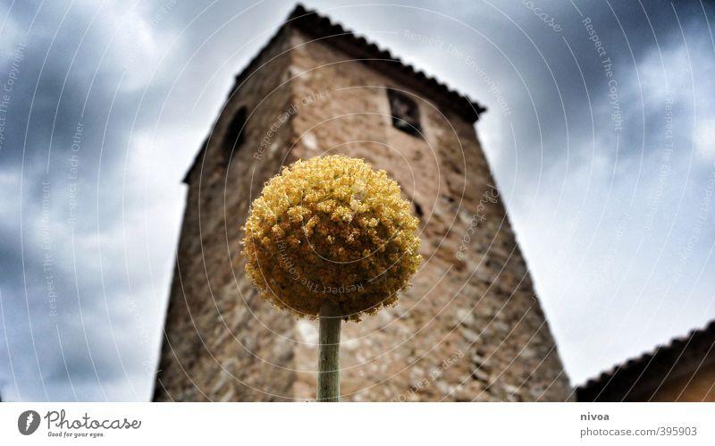 David und Goliath Himmel Sommer Pflanze Blume Wolken gelb Fenster Wand Architektur Mauer Blüte Stein Kunst Wetter Tourismus Schönes Wetter