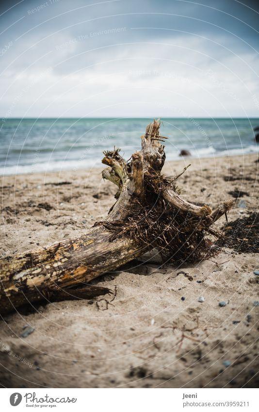 Knorriger Baumstamm liegt am Strand im Sand Totholz knorrig Holz Baumstumpf Ostsee Regen Regenwolken Winter Herbst winterlich herbstlich Meer Trauer traurig