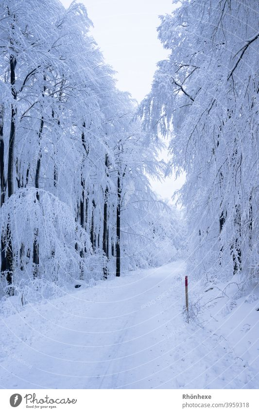 Ein tiefverschneiter einsamer Weg im Winterwald Schnee Baum kalt Frost weiß Wald Außenaufnahme Menschenleer Natur Tag Farbfoto Schneelandschaft Winterstimmung