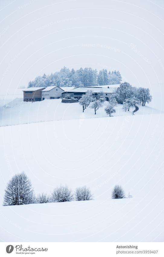 Eingeschneiter Bauernhof auf einem Hügel Schnee Winter Winterlandschaft Natur Landschaft Haus Landwirtschaft weiß hell kalt kühl SchneeTal Mühlviertel
