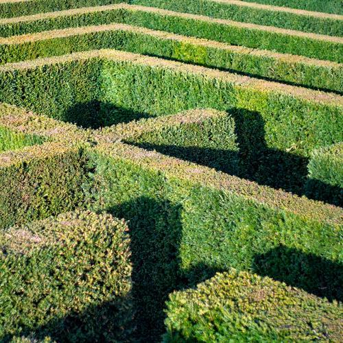 irren ist menschlich Irrgarten Hecke flora Garten Park Schlosspark Parkanlage Schatten Sonne Weg suchen finden Linien Geometrie Ausweg Tuja verloren verlassen
