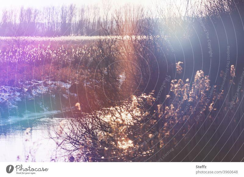 Wintertag am Flussufer kleiner Fluss winterliche Stille Bach Bachufer Wasser fließen Blendenfleck Lichtspiegelung besonderes Licht heimisch Winterstimmung