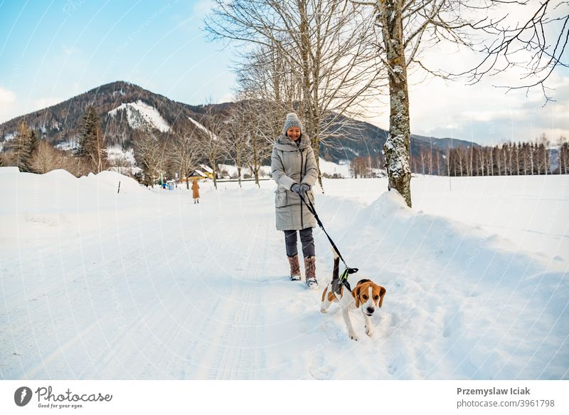 Frau mit Hund auf einem Spaziergang in Winterlandschaft Hintergrund Baum Wasser offen Natur anleinen Alpen sehen malerisch Gipfel Park natürlich Beagle