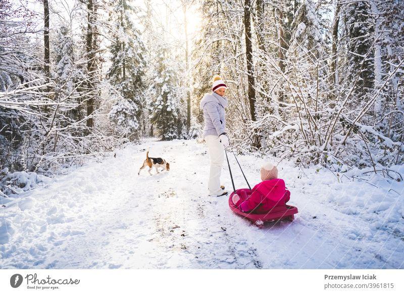 Mutter, die ihr Baby auf einem Schlitten durch den Winterwald zieht. Hintergrund offen Wald Familie authentisch ziehend Hund Kind Person Mädchen Weihnachten