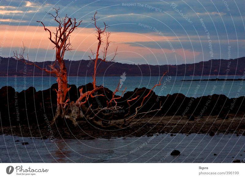 Himmel Ferien & Urlaub & Reisen blau grün weiß Pflanze Baum Meer rot Wolken Blatt Strand schwarz gelb Küste Stein