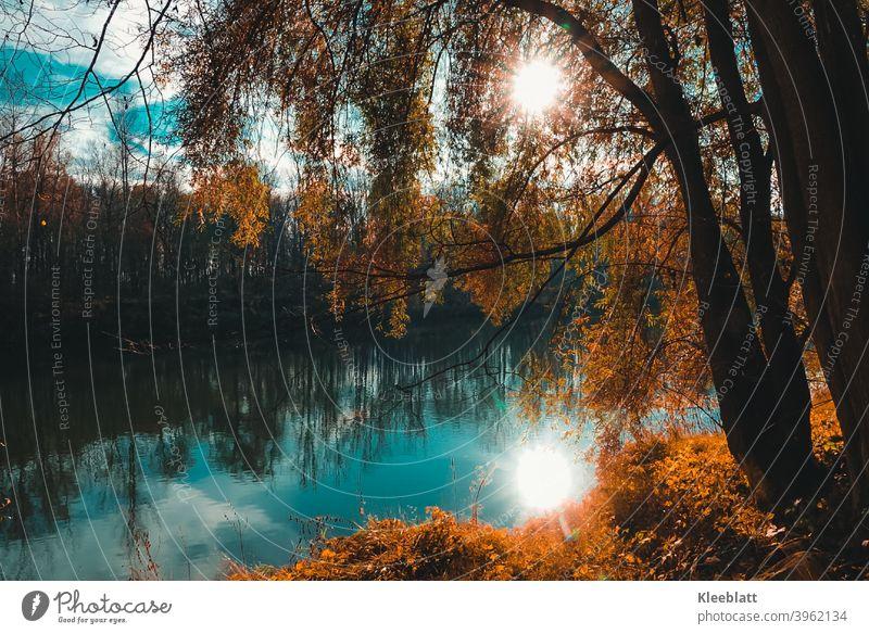 An der schönen blauen Donau  - Herbststimmung am Fluß in dem sich die Sonne spiegelt Herbst, Stimmung Baum Außenaufnahme Landschaft Farbfoto Tag Sonnenlicht